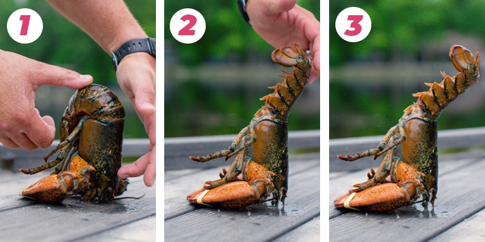 how to hypnotize a lobster so it stands on its head  let