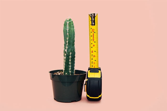 Condom Size in Inches - Cactus with measuring tape