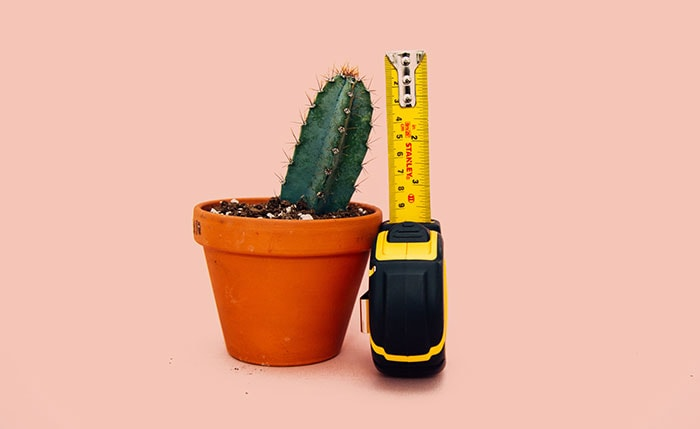 Condom Size in Inches - smaller cactus with measuring tape
