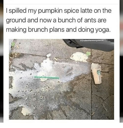 Pumpkin Spice Latte Memes - ants making brunch plans and doing yoga