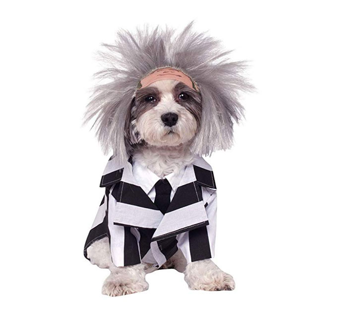 Funny Dog Costumes for Halloween - Beetlejuice