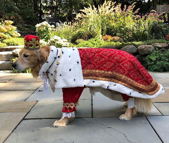 Funny Dog Costumes for Halloween - King George Hamilton