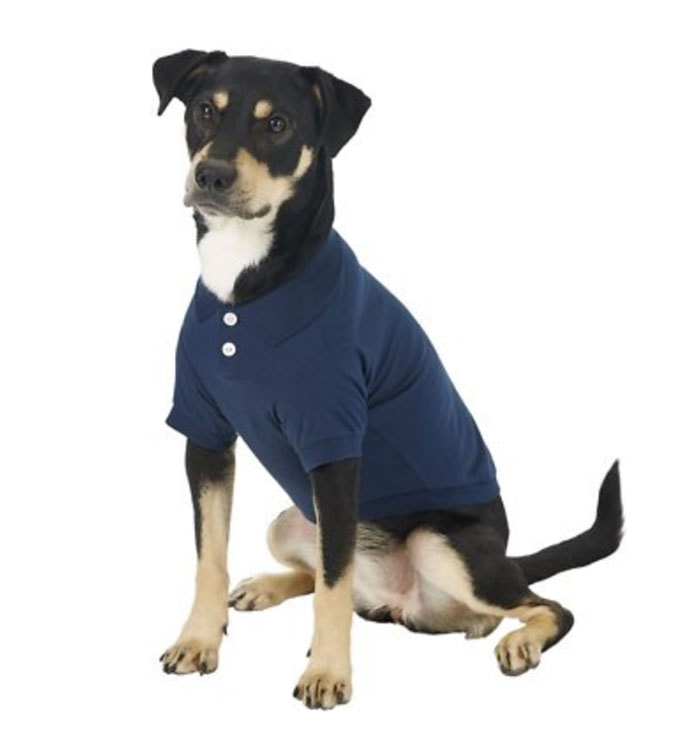 Funny Dog Costumes for Halloween - Polo Shirt Large