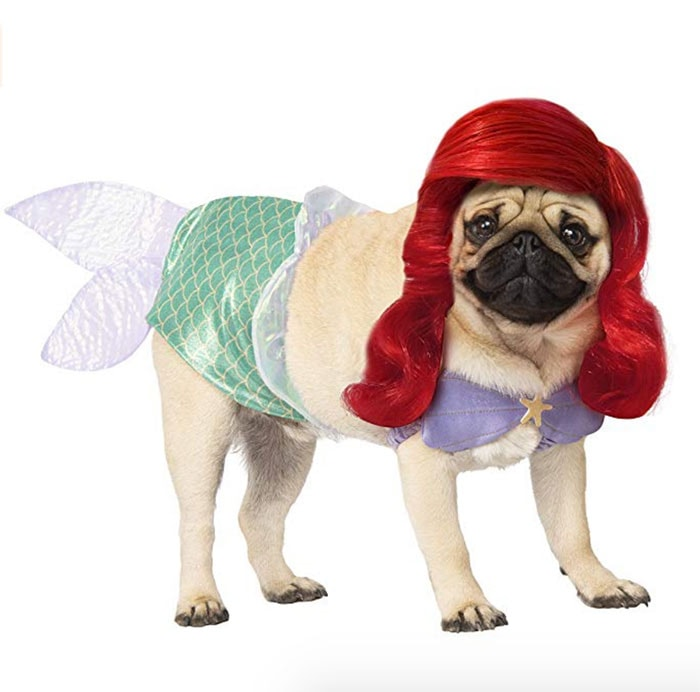 Funny Dog Costumes for Halloween - The Little Mermaid