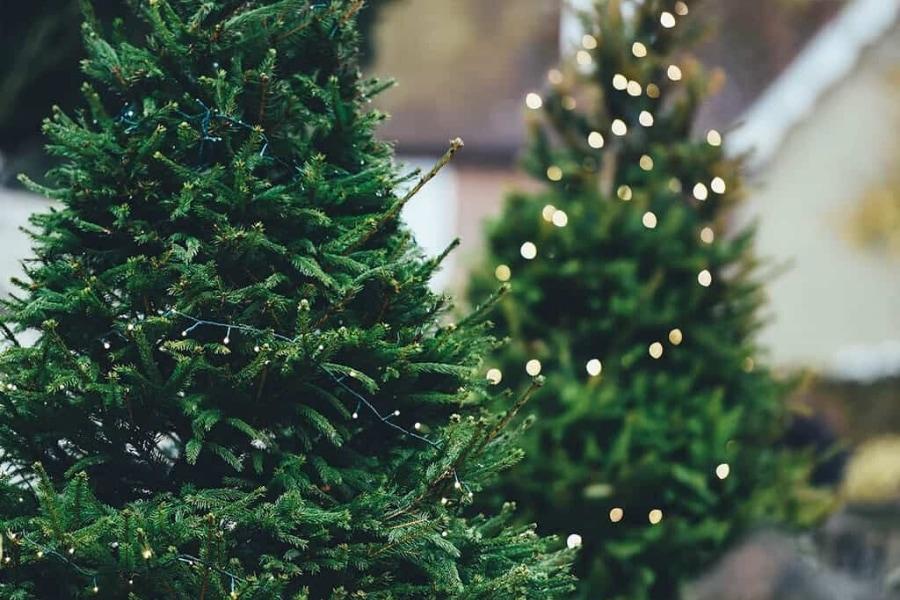 douglas fir christmas tree with lights