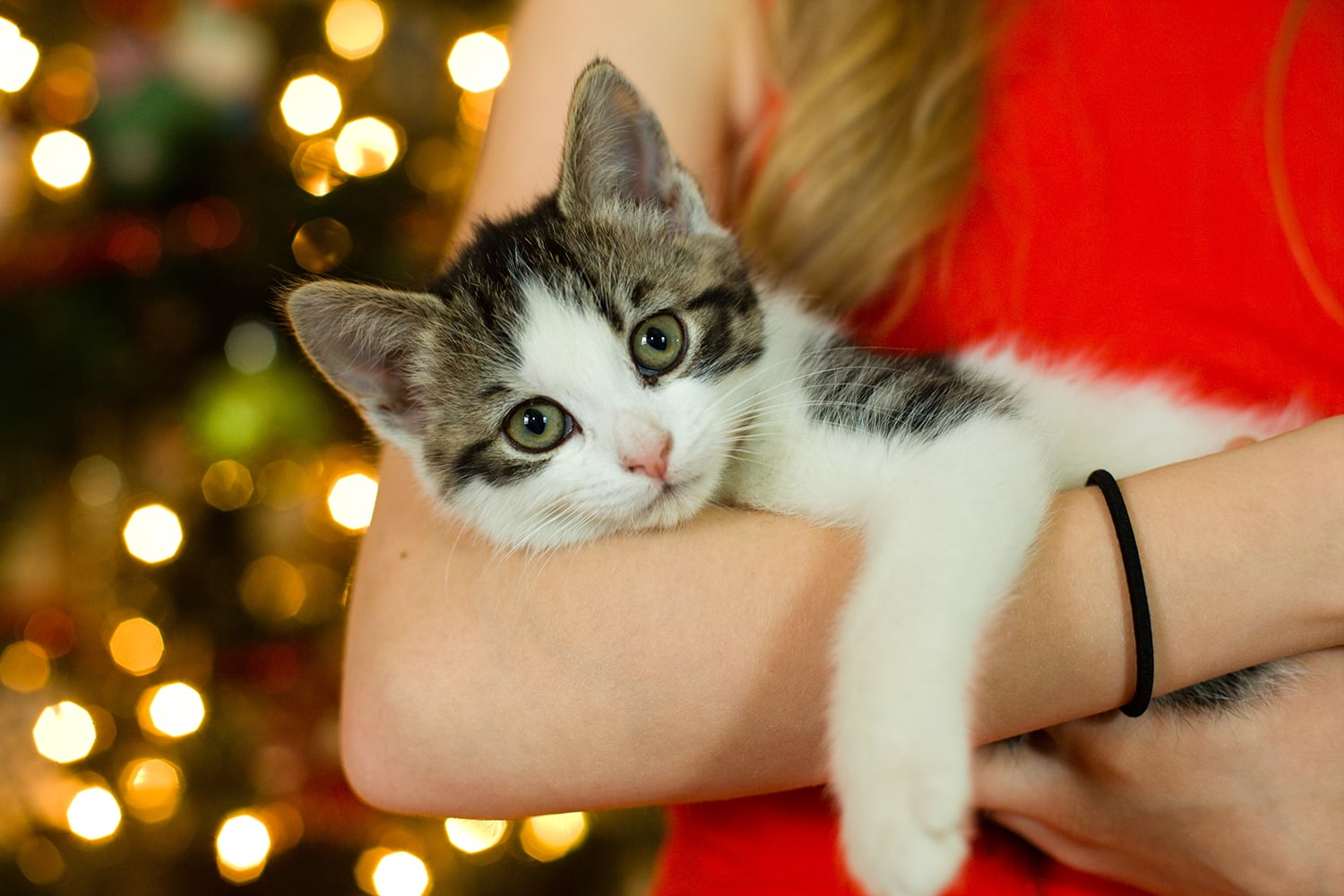 Christmas Hashtags for your Instagram - woman holding cat