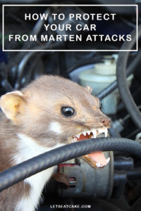 How to Protect Your Car from Martens