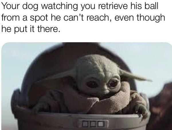Baby Yoda Memes - Fetch Dog