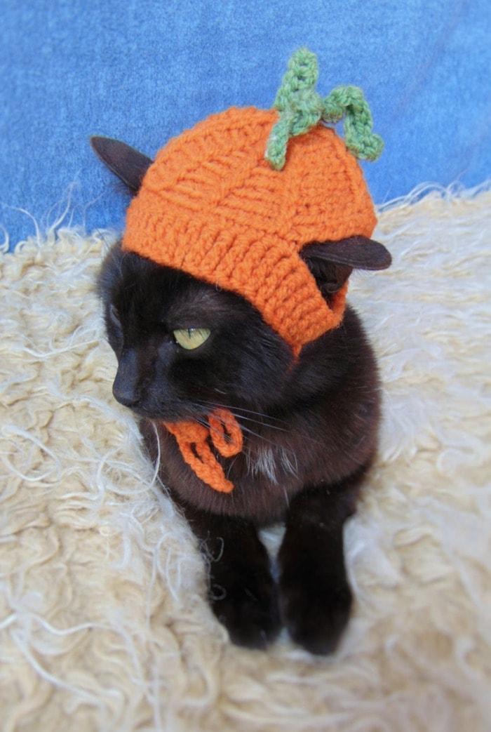 Cats Wearing Hats - Pumpkin