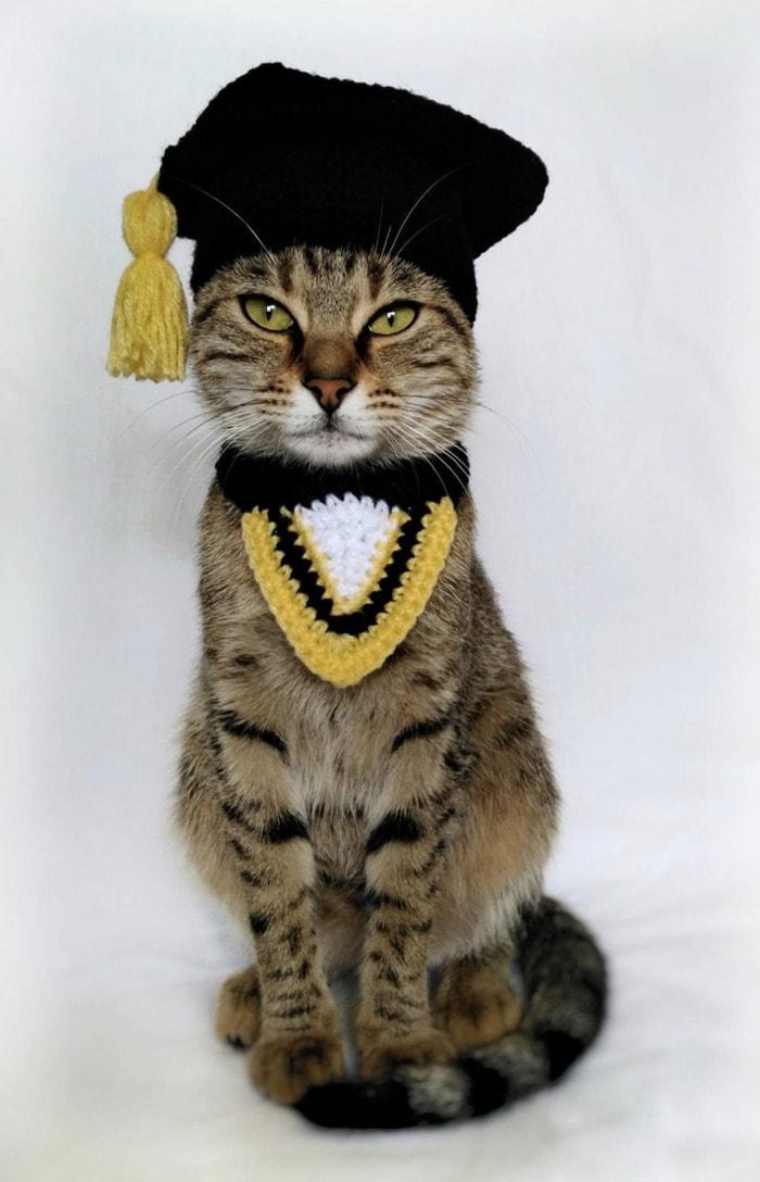 Cats Wearing Hats - Graduation Cap
