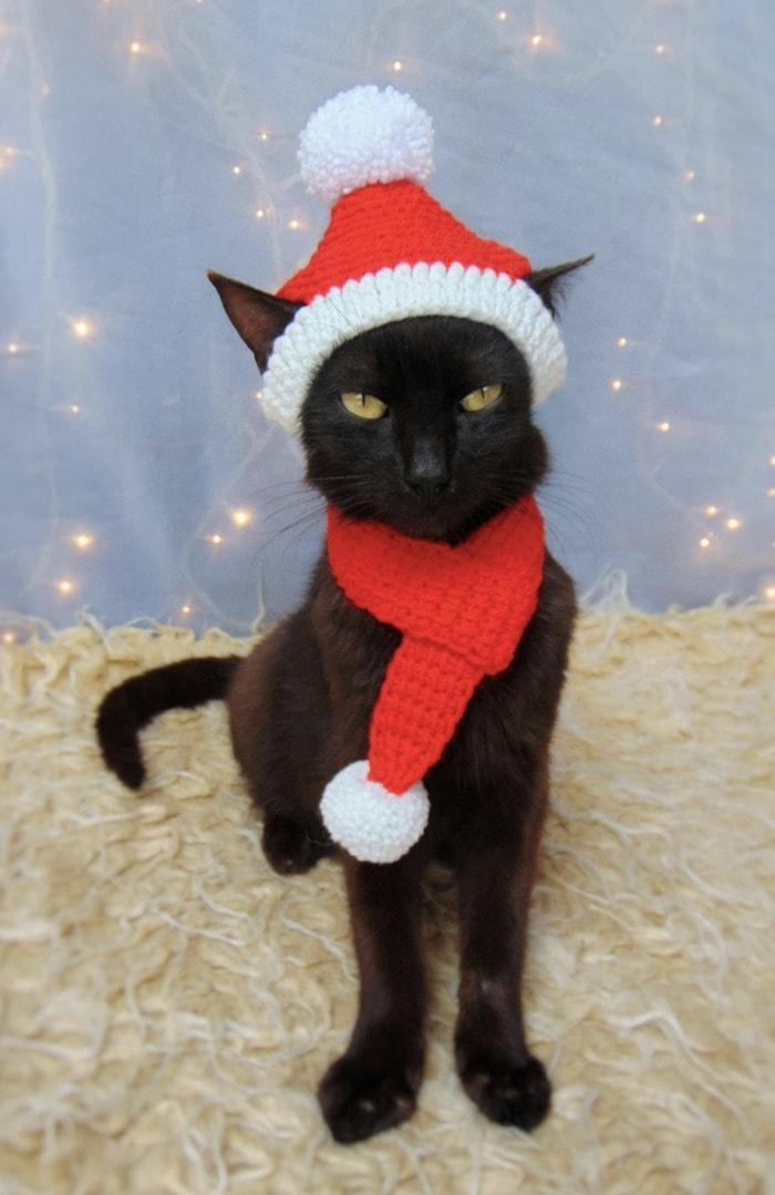 Cats Wearing Hats - Santa