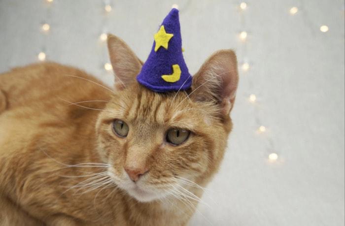 Cats Wearing Hats - Felt Wizard