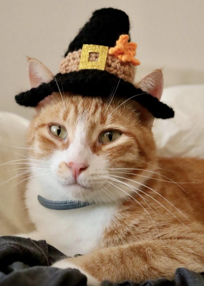 Cats Wearing Hats - Thanksgiving Pilgrim Hat
