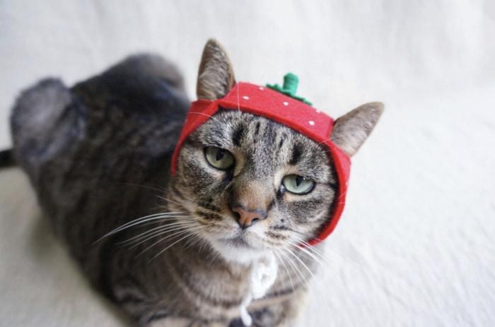 Cats Wearing Hats - Strawberry