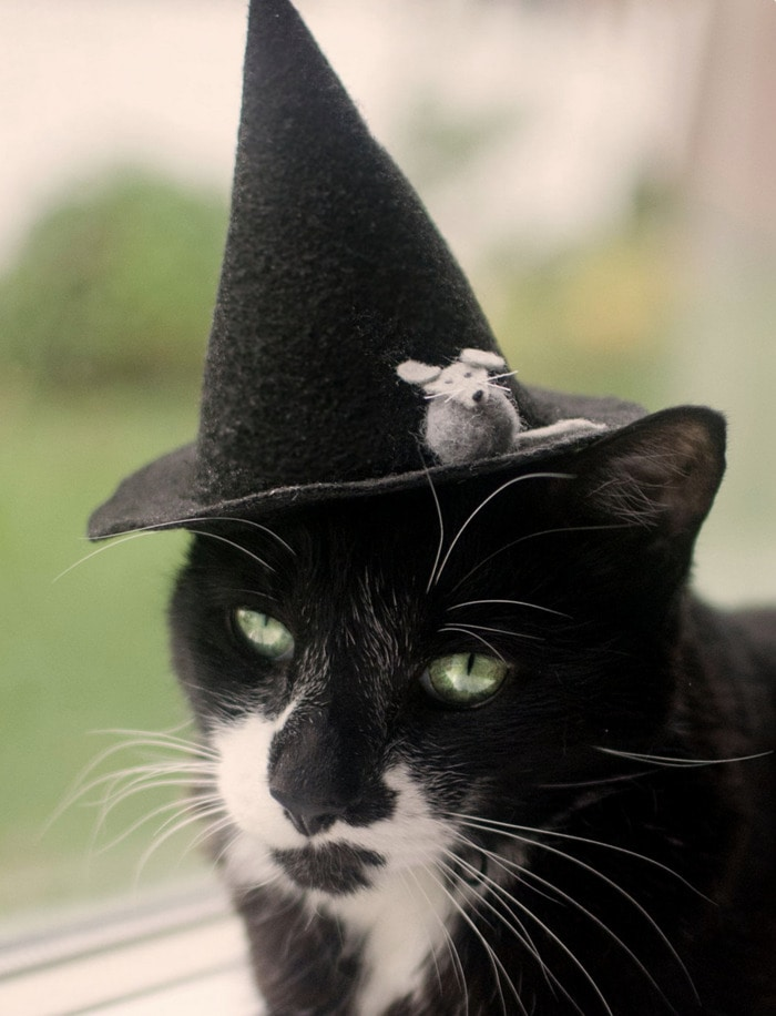Cats Wearing Hats - Witch