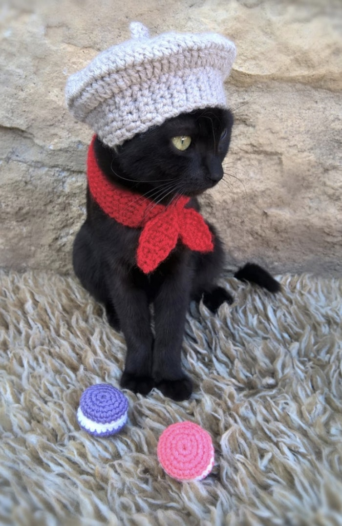 Cats Wearing Hats - French Beret and Scarf with Macarons