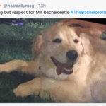 Bachelorette Memes - dog