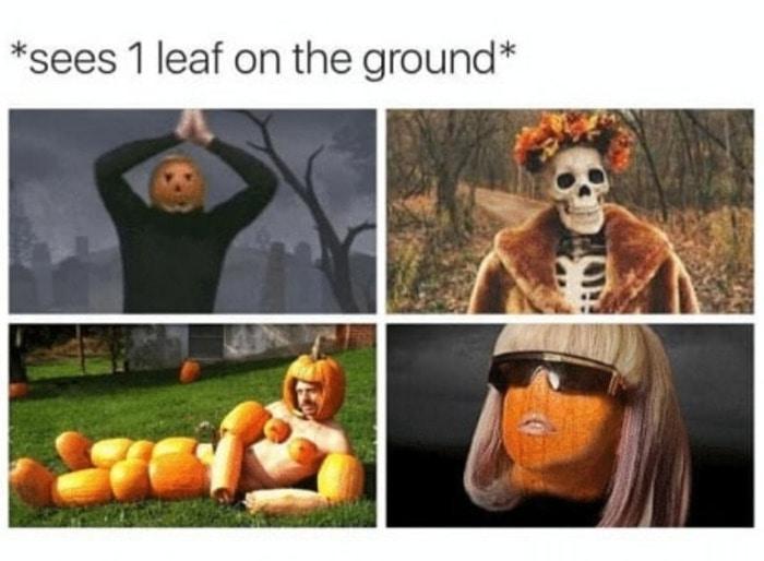 Pumpkin Memes - leaf