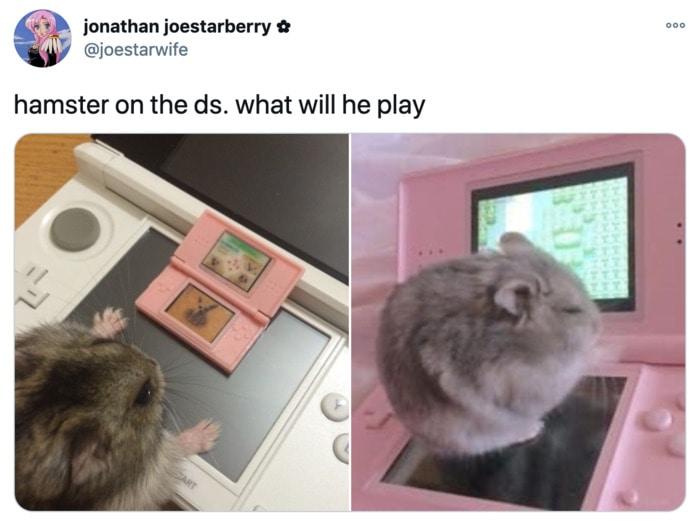 Hamster Memes - DS
