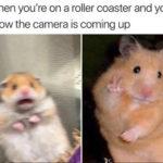 Hamster - Roller Coaster