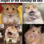 Scared Hamster Workday Stages