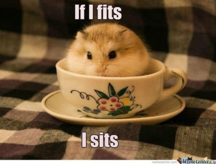 Hamster If It Fits I Sits