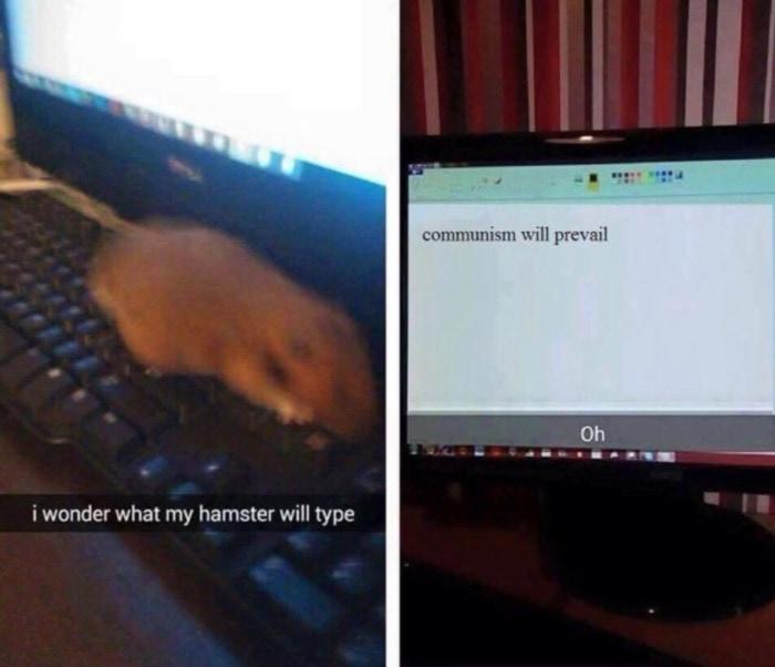 Hamster Snapchat