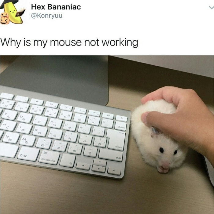 Hamster Memes - Mouse