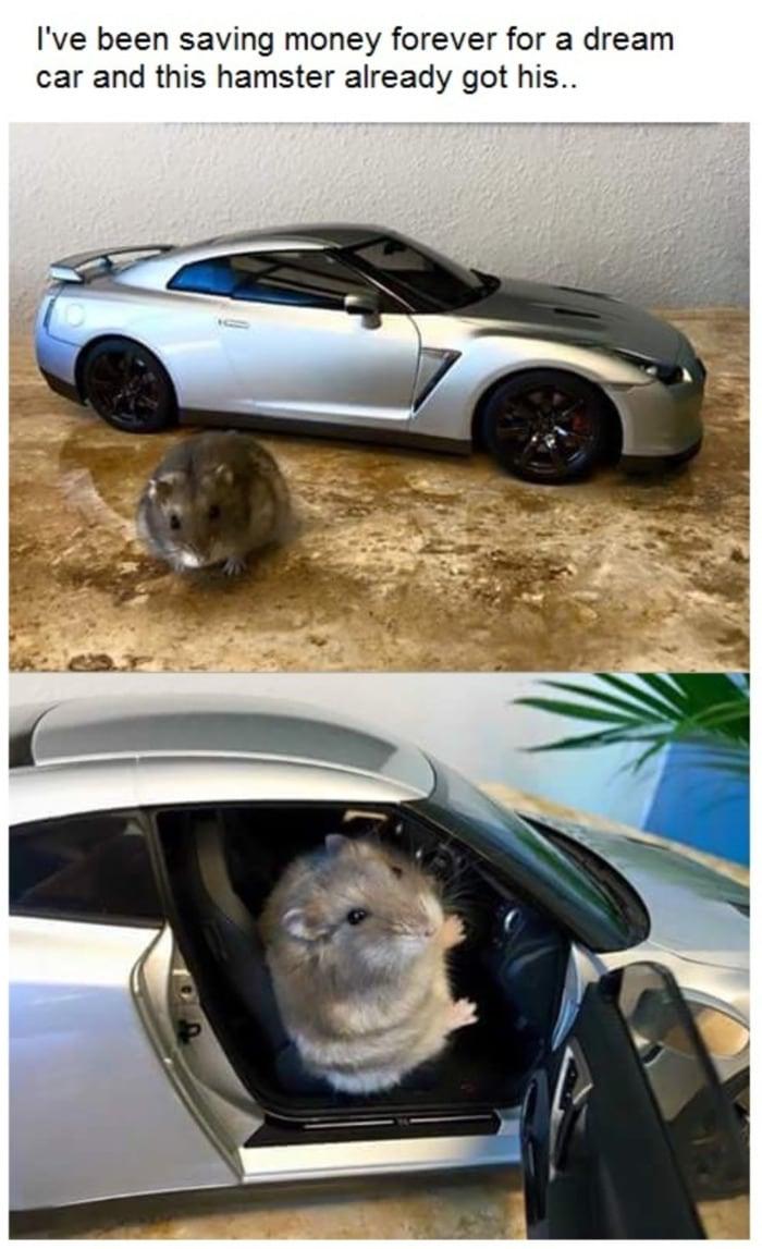Hamster - Sports Car
