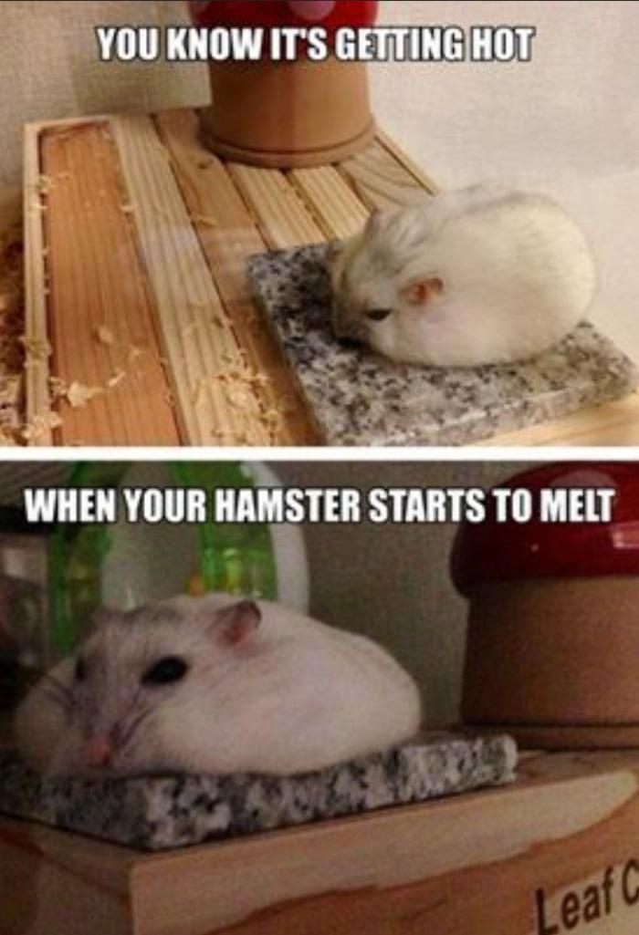Hamster Melting