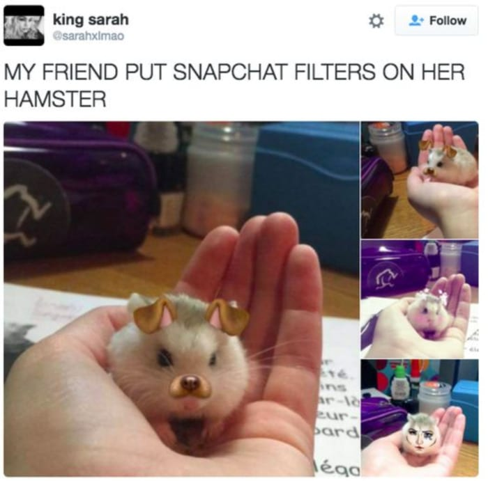 Hamster - Snapchat Filters