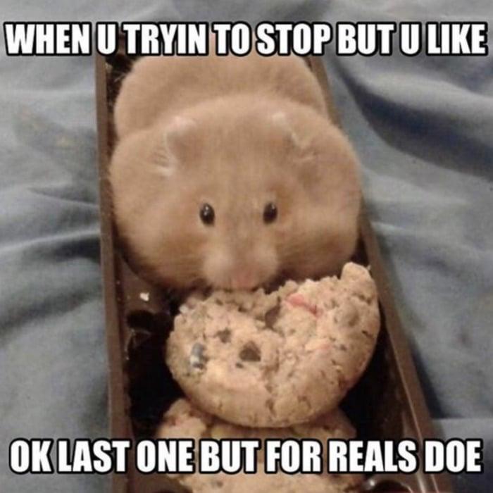 Hamster - Diet