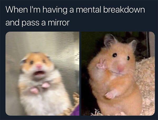 Hamster Memes - Breakdown