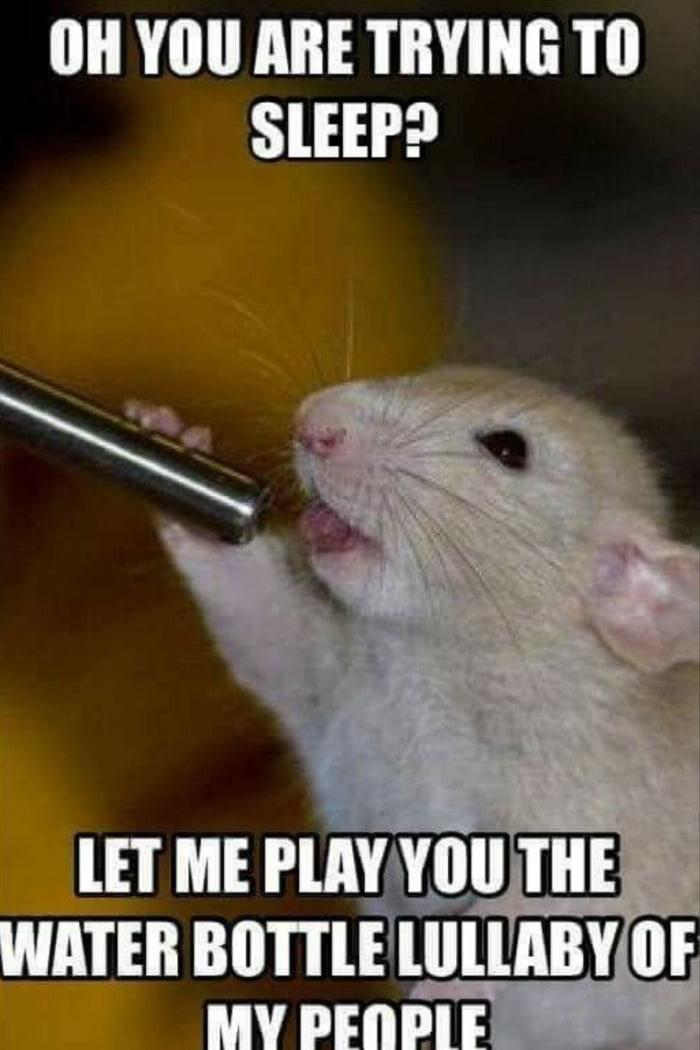 Hamster Memes - Water Bottle of My People