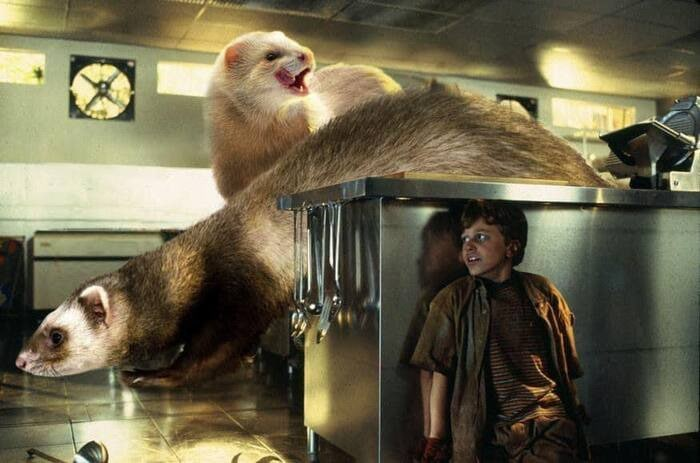 Jurassic Park Dinosaurs Replaced By Ferrets - Kitchen Velociraptors