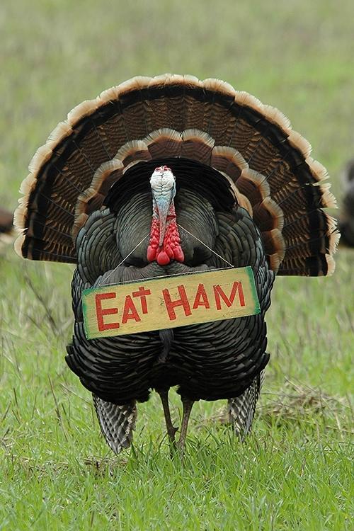Thanksgiving Jokes - Turkey Holding Eat Ham Sign