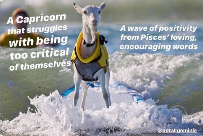 Capricorn Memes - Goat surfing