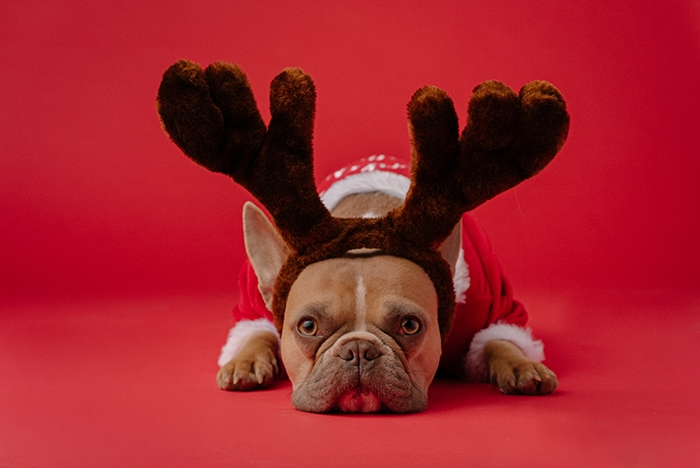 Christmas Captions for Instagram - Dog with Antlers