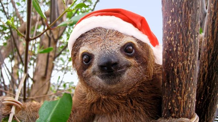 Christmas Jokes - Sloth with Santa Hat