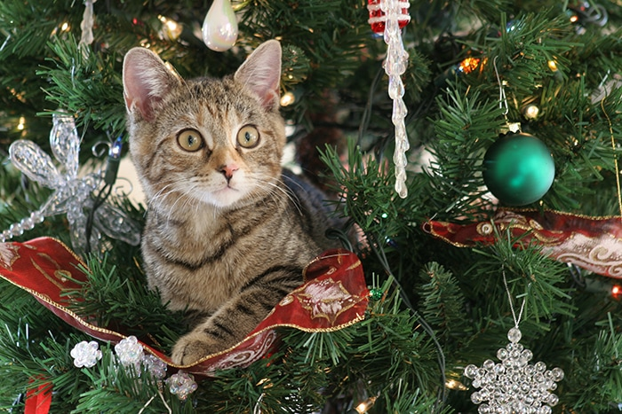 Christmas Jokes - Cat in Tree