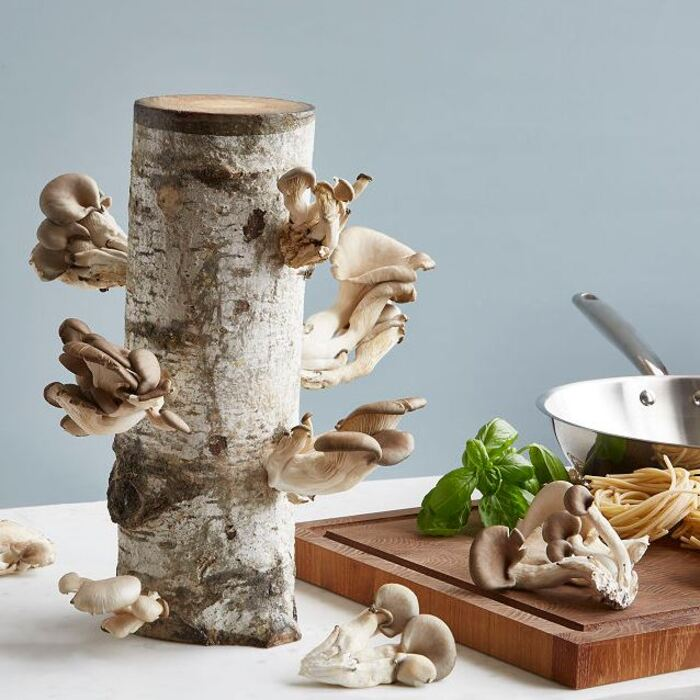 Gifts for nature lovers - Oyster Mushroom Log Kit