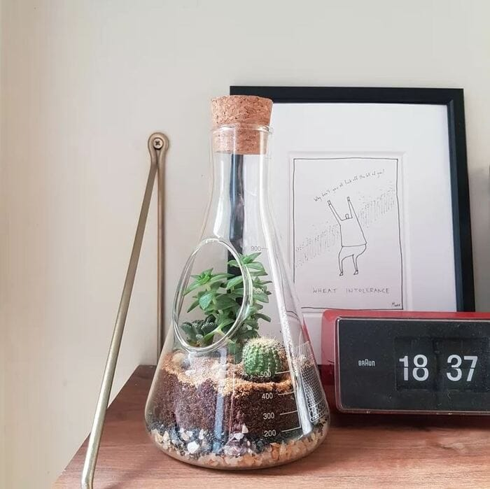 Gifts for nature lovers - Chemistry Glass Terrarium