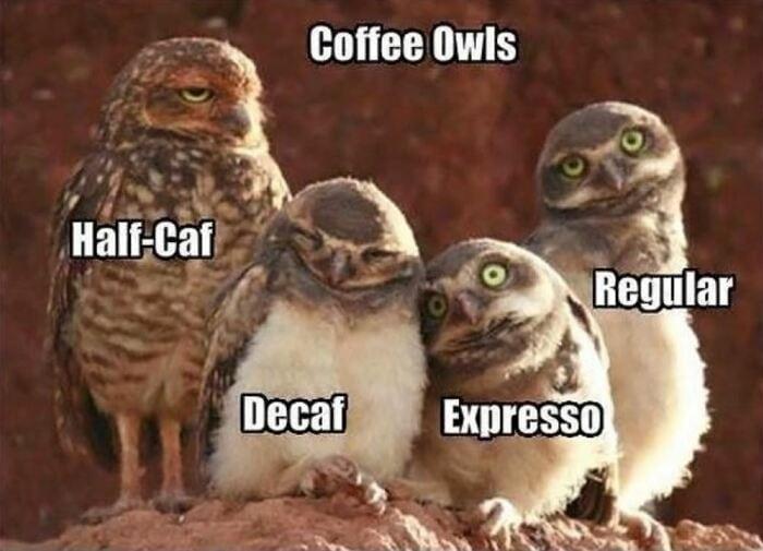Owl Memes - Coffee owls, Half caf decaf, expresso regular.