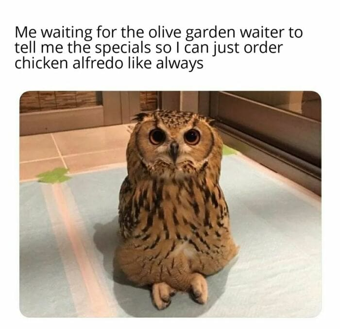 Owl Memes - Me waiting for the olive garden waiter to read me the specials so I can order the Chciken Alfredolike always. Cross legged owl
