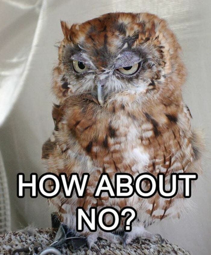 Owl Memes - How about no? Scowling owl