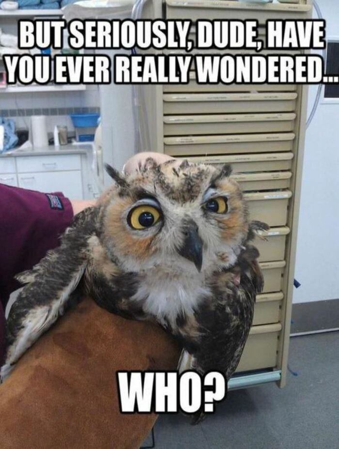 Owl Memes - But seriously, Dude, Have you ever really wondered.. Who?