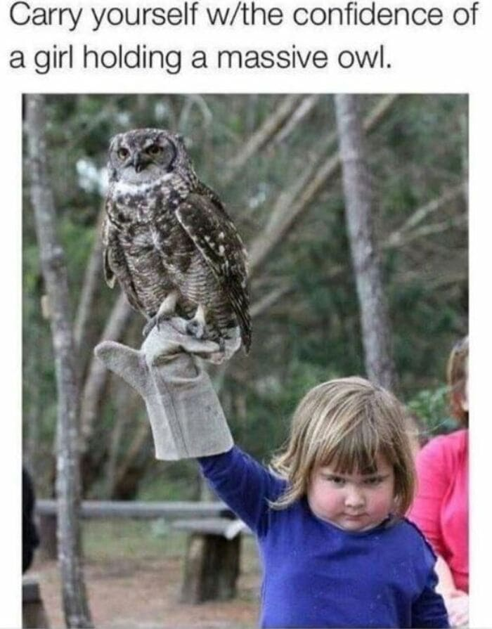 Owl Memes - Carry yourself with the confidence of a girl carrying a missive owl