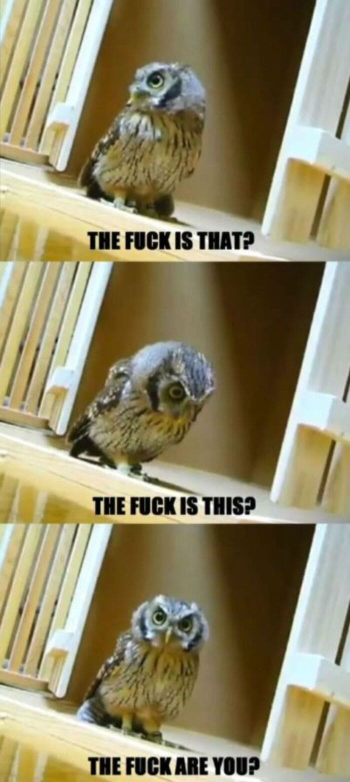 Owl Memes - confused owl