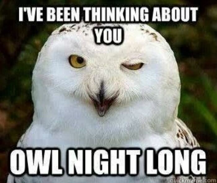 Owl Memes - I've been thinking about you Owl night long
