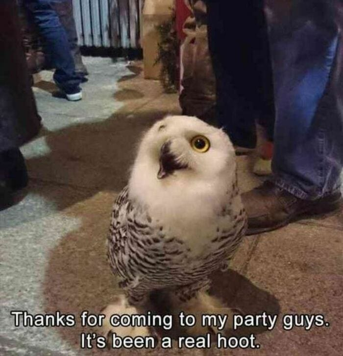 Owl Memes - Thank for coming to my party guys, It's been a real hoot